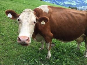 Sind in Brandburg nicht nur die Kühe braun